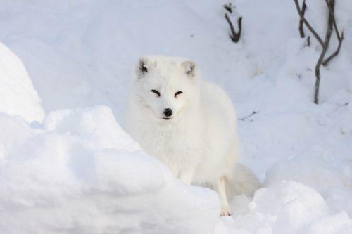 2_fox_100103.jpg