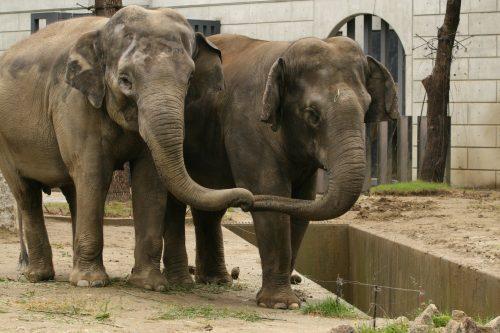 elephant_080620.jpg