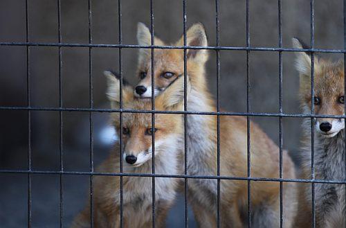 fox_090831_2.jpg