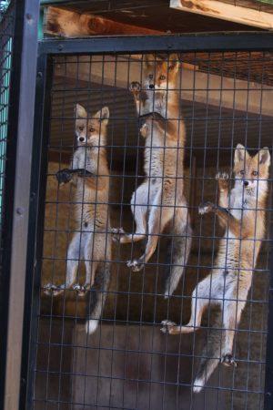 fox_090831_3.jpg