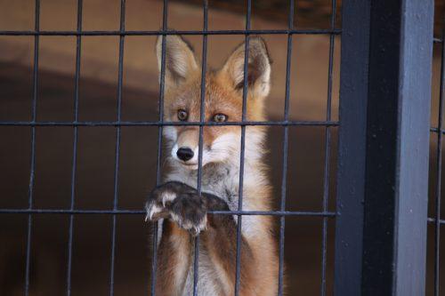 fox_090831_4.jpg