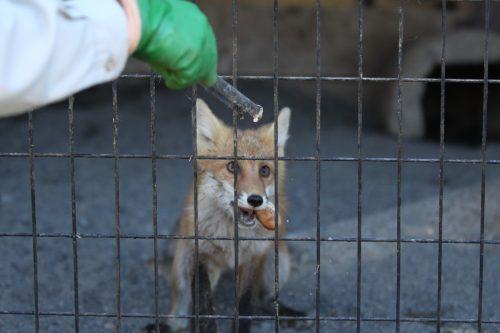 fox_090831_5.jpg