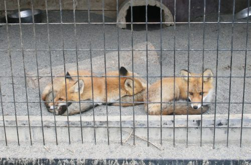 fox_090831_6.jpg