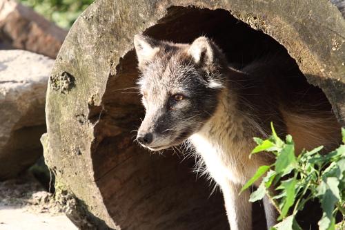 fox_100731_4.JPG