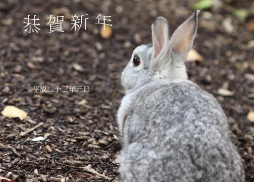 nenga_rabbit.JPG