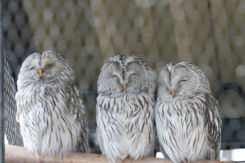 owl_090505.jpg