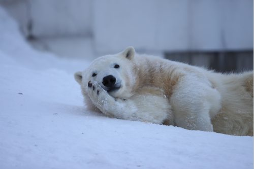 polar_100220_1.jpg