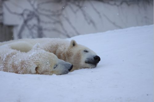 polar_100220_2.jpg