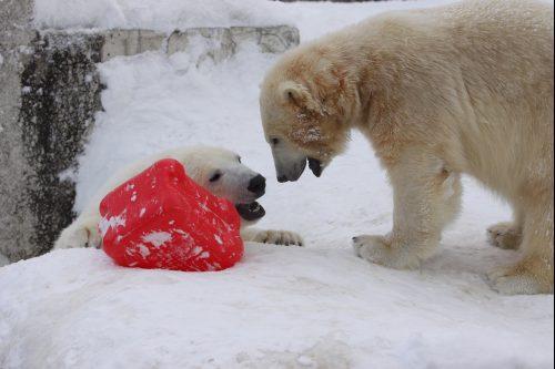 polar_100220_5.jpg